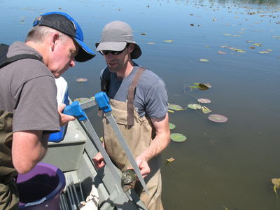 Implementing Great Lakes Coastal Wetland Monitoring