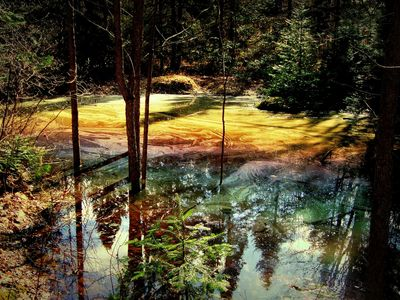Construction of vernal pools as a resource for eco-evolutionary research at ND-LEEF