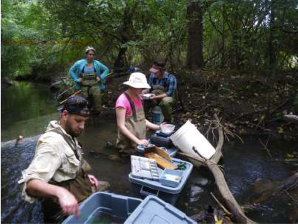 Long-term fish community response to a reach-scale stream restoration