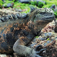"Students explore ""living museum:"" Galápagos Islands"