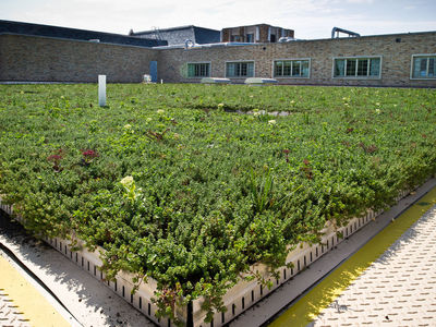 Dr. Ashish Sharma Discusses the Importance of Green Roofs