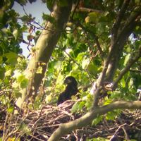 Two bald eaglets born at ND-LEEF in St. Patrick's County Park