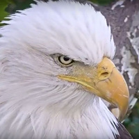 "ND-LEEF to debut new ""In-Nest"" Eagle Cam"