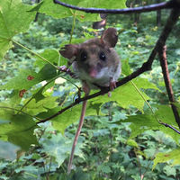 """Science at Sunset"" series presents discussion on the role of small mammals in ecosystems"